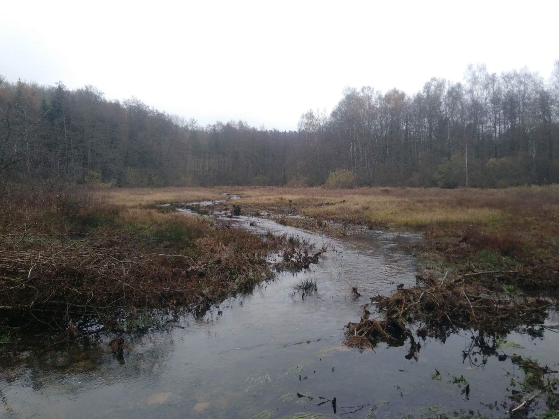 Ruisseau du Mansevillers